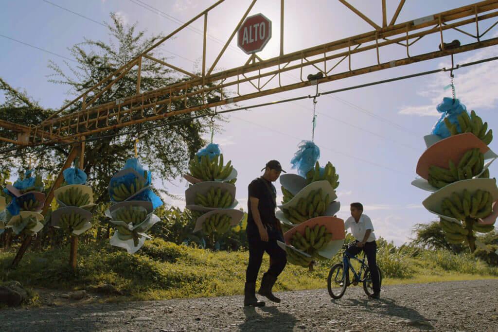 Η Chiquita δημοσιεύει τον Απολογισμό Βιωσιμότητας για το 2019