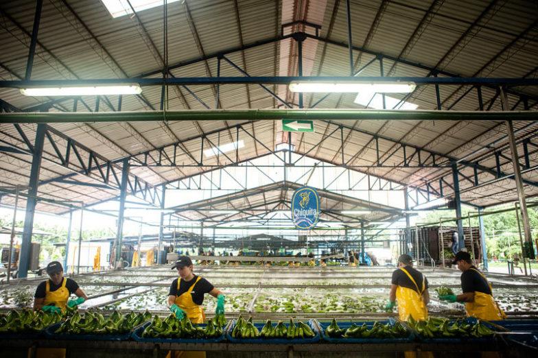 Η διαχείριση του υδάτινου αποτυπώματος στις φυτείες της Chiquita εξοικονομεί 1,8 δισεκατομμύρια λίτρα νερού κάθε χρόνο - 4