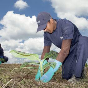 Η Chiquita ηγείται των προσπαθειών διατήρησης της βιοποικιλότητας