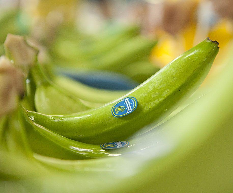 Chiquita Banana Brand - Sustainability