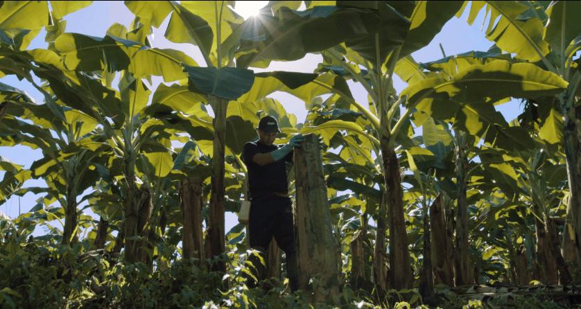 Βιώσιμη_γεωργία