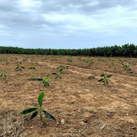 Η αφοσίωσή μας στη βιώσιμη γεωργία
