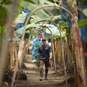 Μπανάνες Chiquita στη φάρμα: Δίνουμε προτεραιότητα στη βιωσιμότητα
