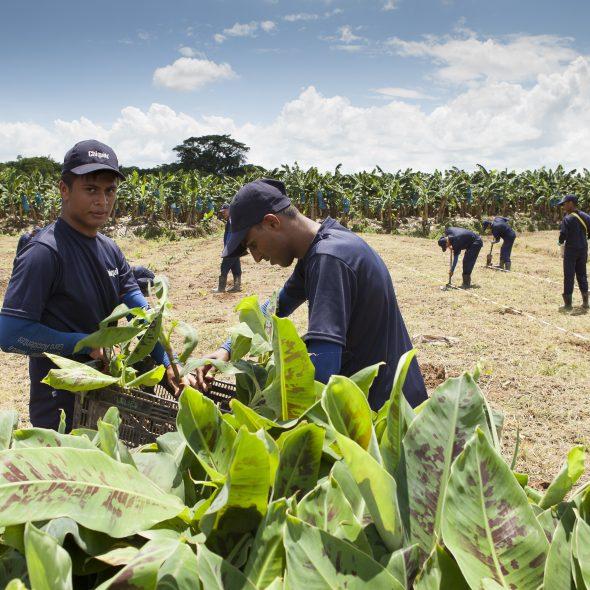 Η Chiquita ενισχύει τη δέσμευσή της για βιώσιμες γεωργικές πρακτικές